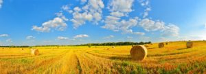 Header - Farm Insurance Bails of Hay